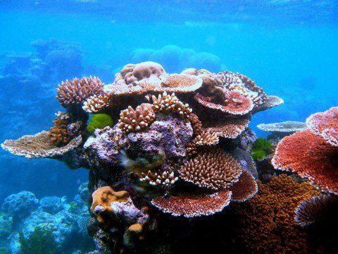 Korallrev i Australien